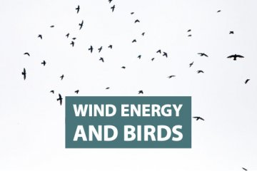 Wind Energy and Birds