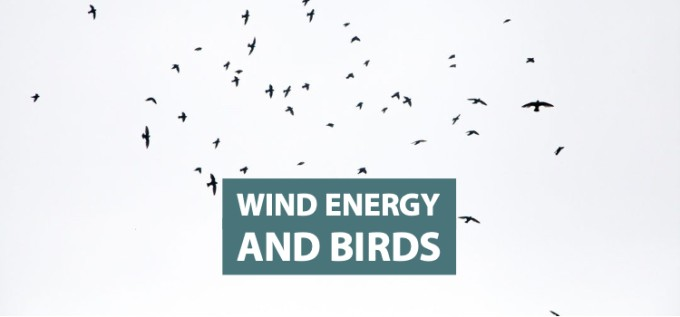 Wind Energy and Birds   Clean Grid Alliance